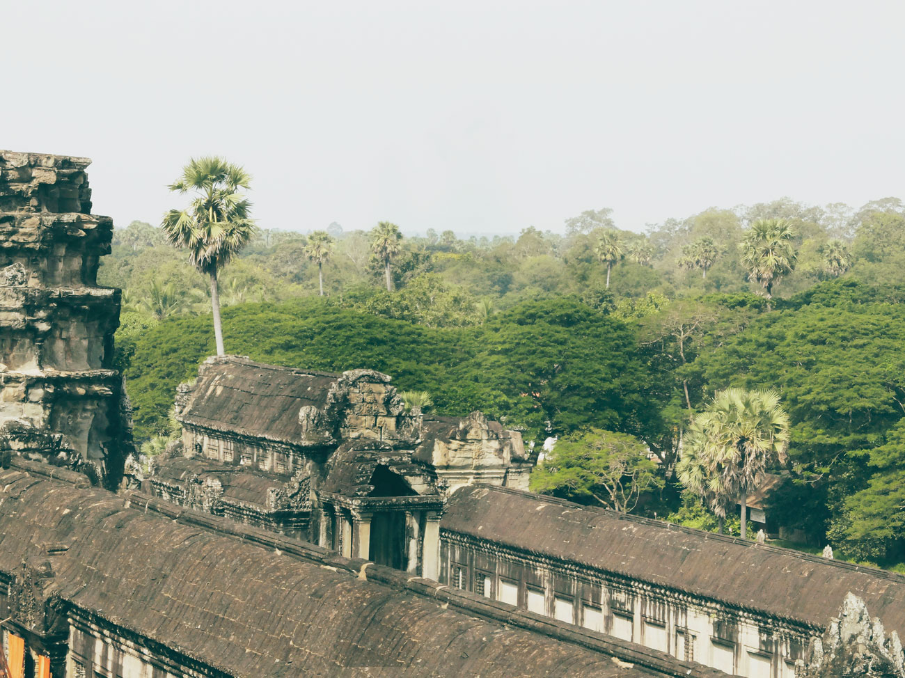 jungle-around-angkor